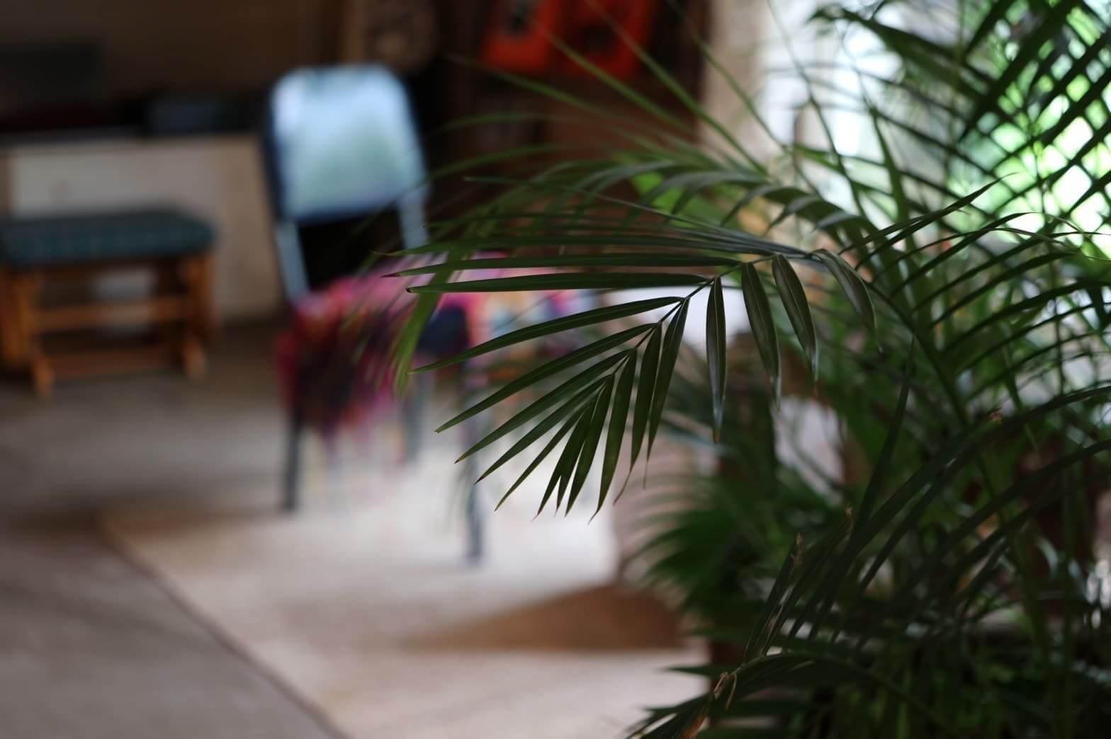 チェジュ島カフェセバの植物