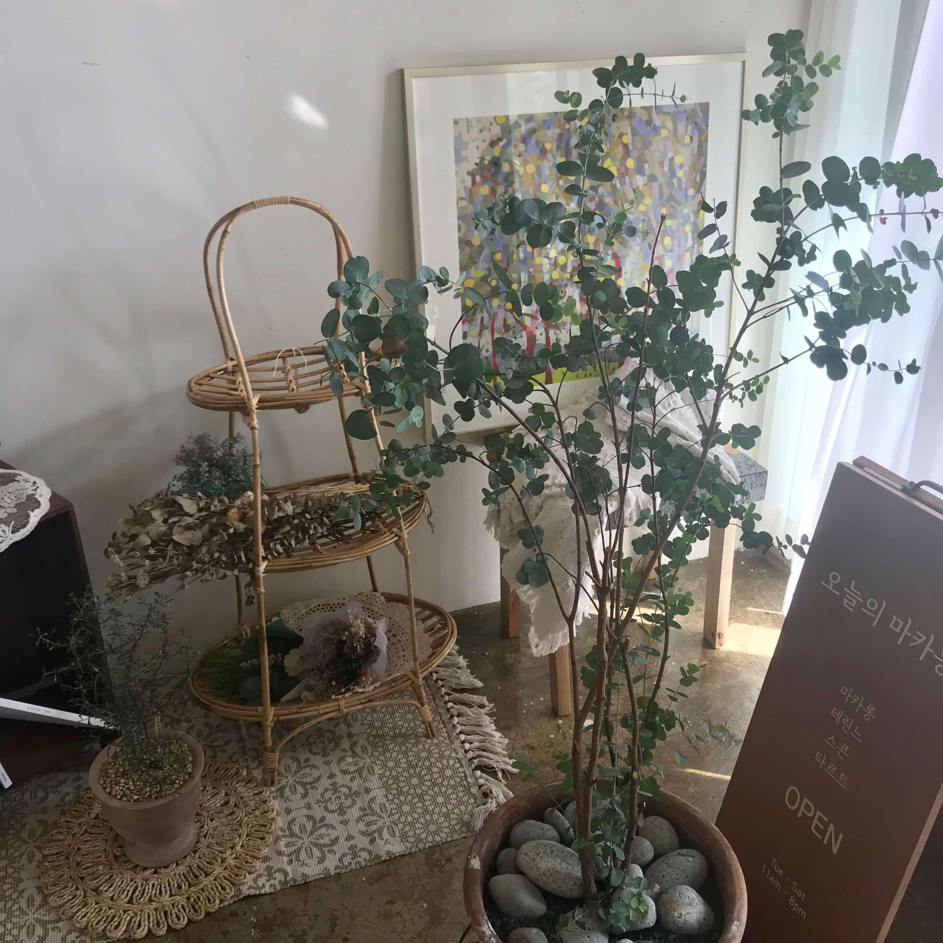 チェジュ島のマカロン店の植物たち